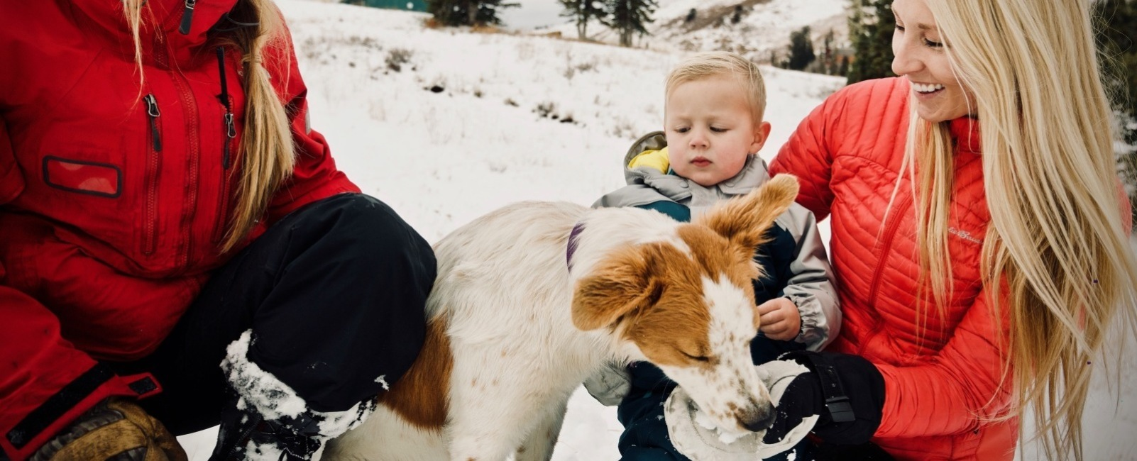 Powder Mountain's newest Avy Rescue Dog