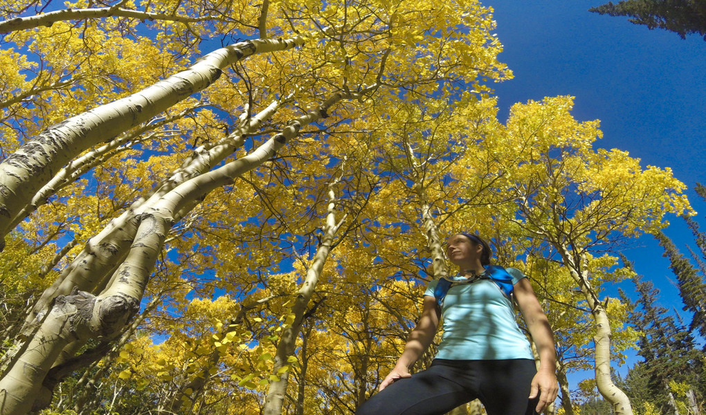 Fall on the Wasatch Crest Trail