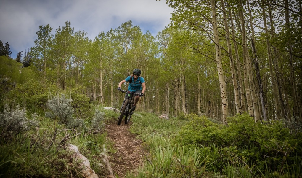 Mountain Biking the Aspens