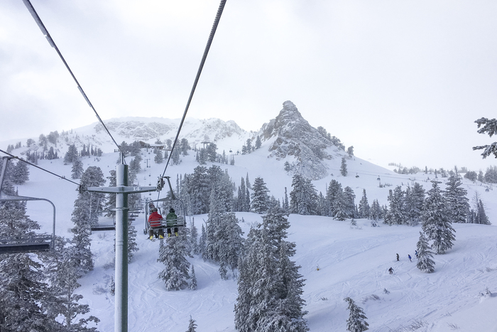 Palm trees to powder before lunch