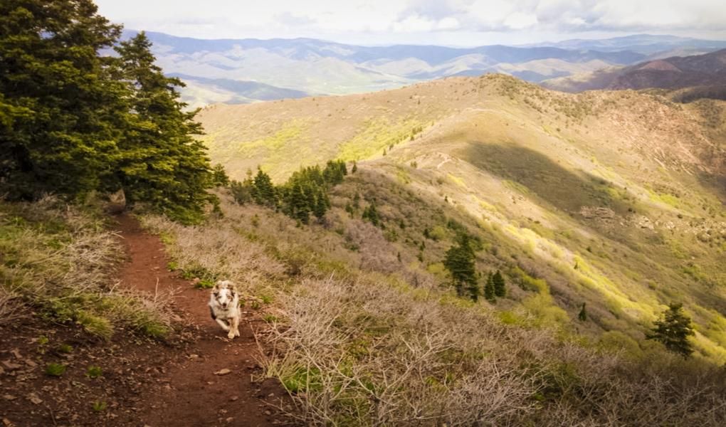 Indy on the trail to Grandeur Peak