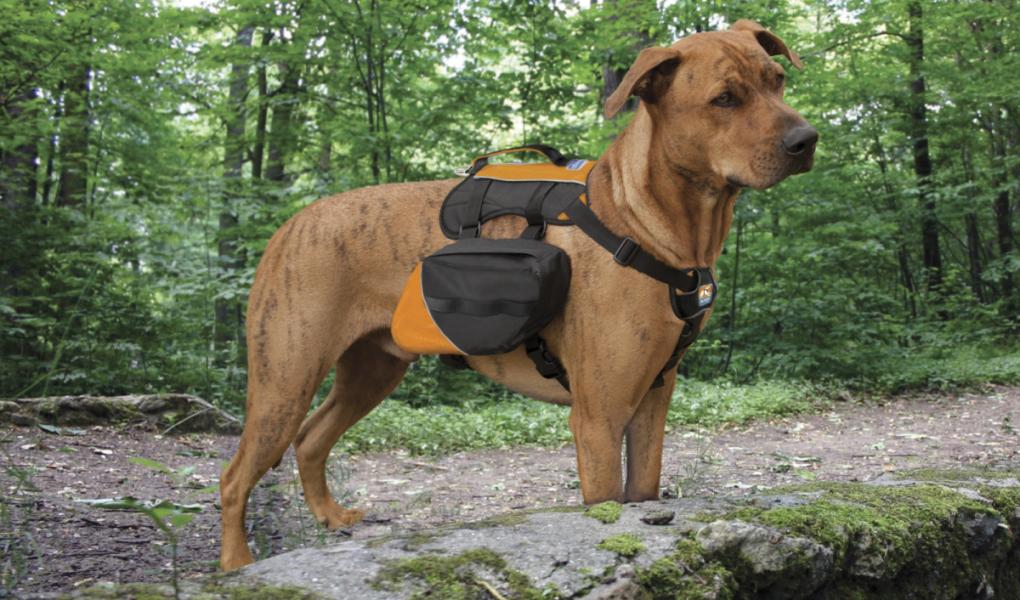 Where to Find Dog Friendly Hikes in Utah - Ski Utah