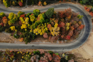 Scenic Drives for Autumn Enthusiasts in Utah thumbnail