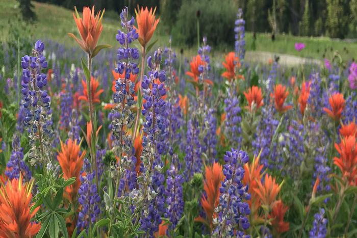 Utah's Best Wildflower Walks and Hikes thumbnail