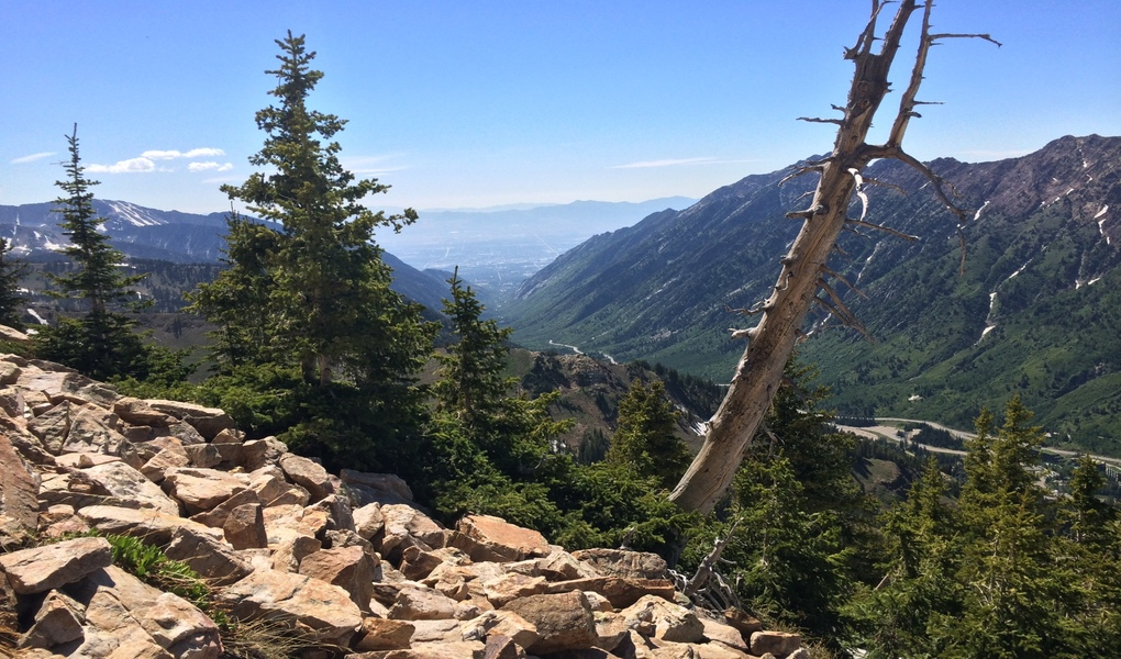 Looking Down Little Cottonwood