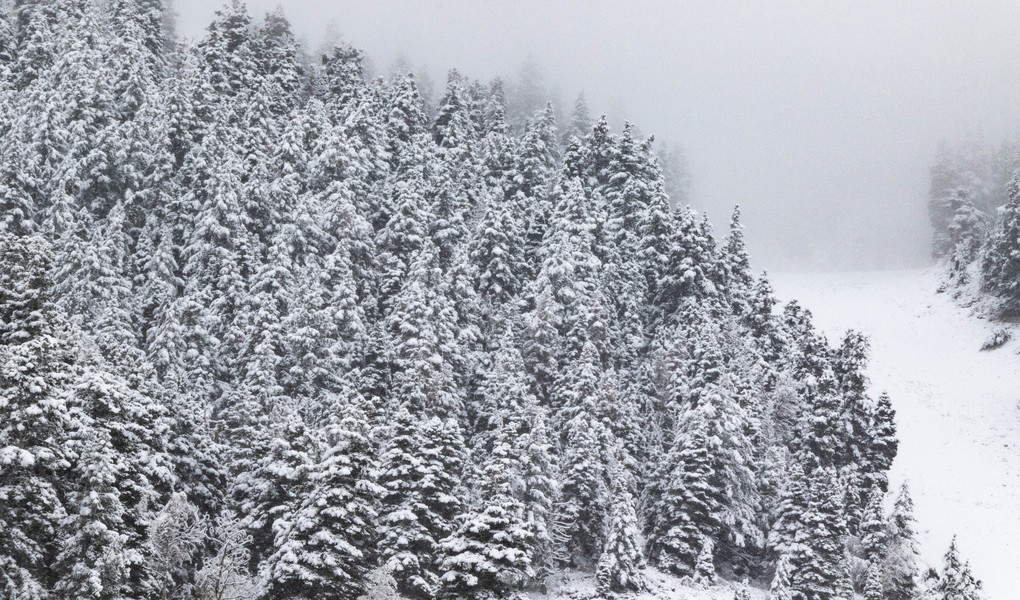 Snowy Trees at Deer Valley