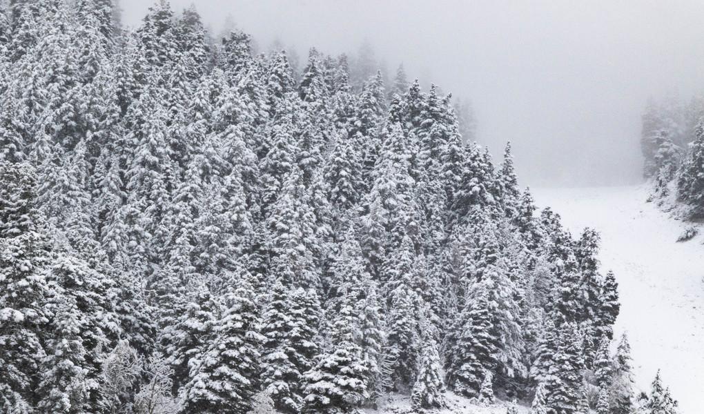 Snowy Trees at Deer Valley