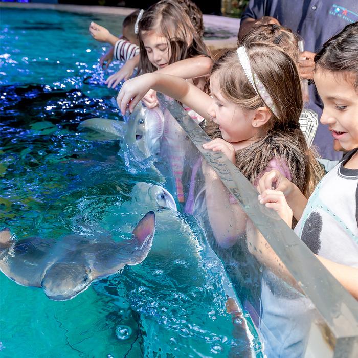 0016_SA Aquarium-16 1 sizjpg