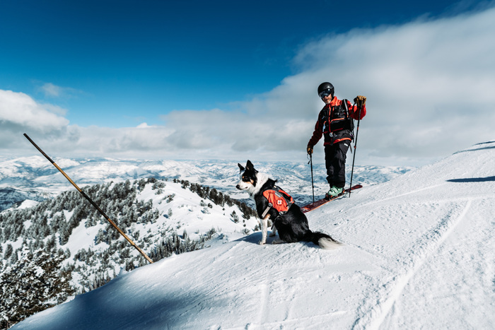 Q&A With an Avalanche Dog Handler
