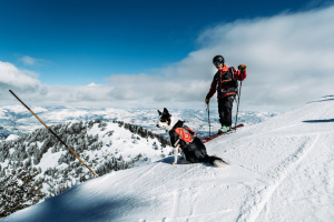 Q&A With an Avalanche Dog Handler  thumbnail