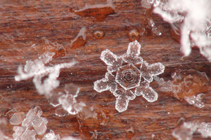 Freeze Frame | Zeroing in on Winter's Beauty thumbnail