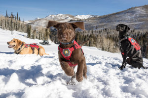 Utah's Newest Avalanche Puppies