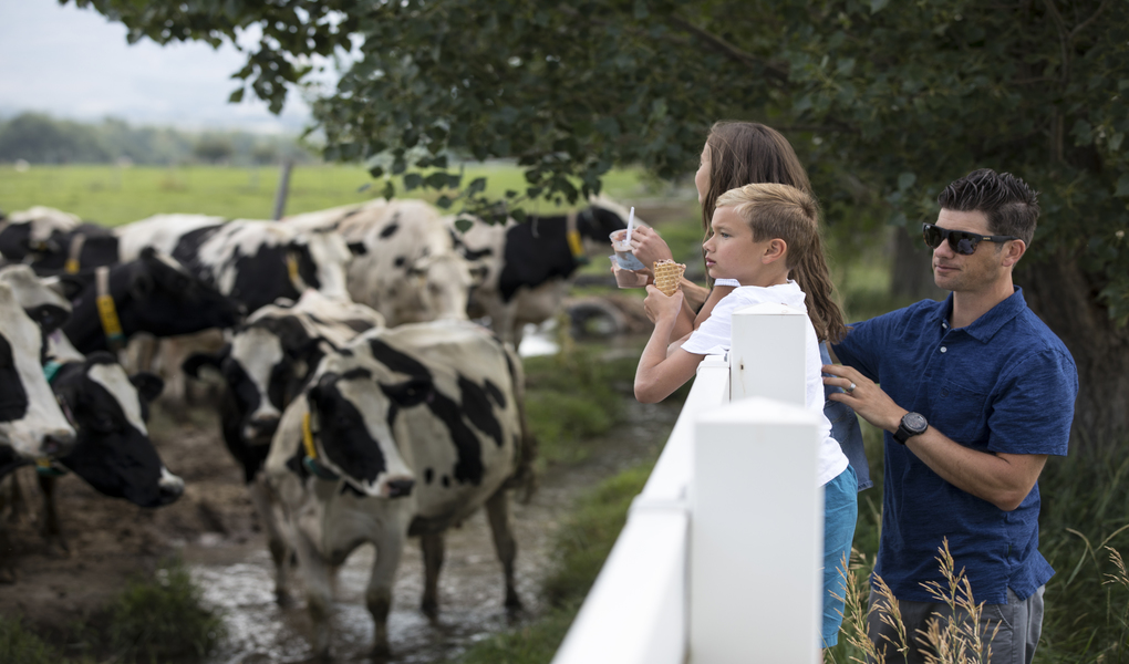 Immerse yourself in the culture in a real working dairy farm - tours daily.