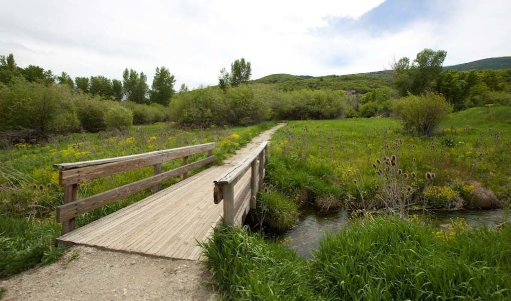 Pineview Trail